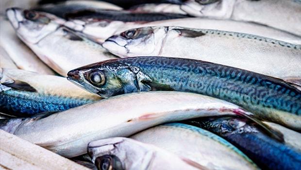 Blog - Sustainability of fish Stocks - Captec